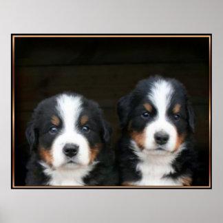 Poster de los perritos del perro de montaña de