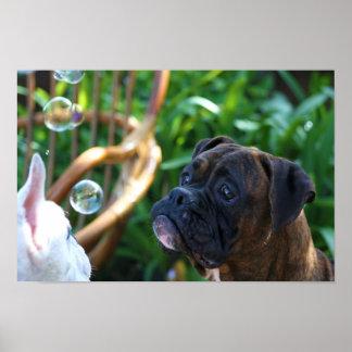 Poster de los perros y de las burbujas del boxeado