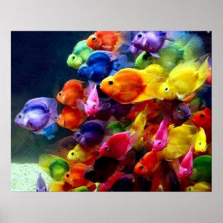 Poster de los pescados de arco iris
