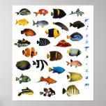Poster de los pescados del acuario