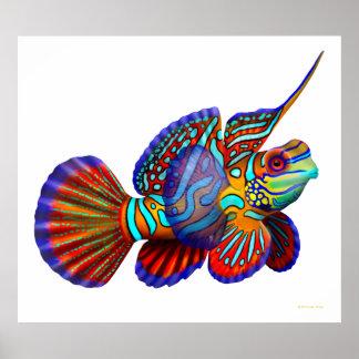 Poster de los pescados del gobio de Dragonet del m