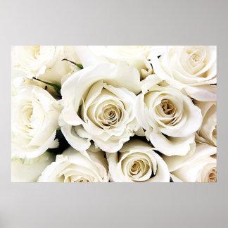 Poster de los rosas blancos póster