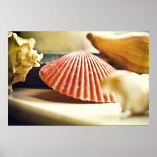 Poster de los Seashells