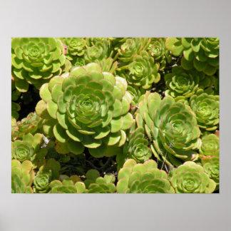 Poster de los Succulents