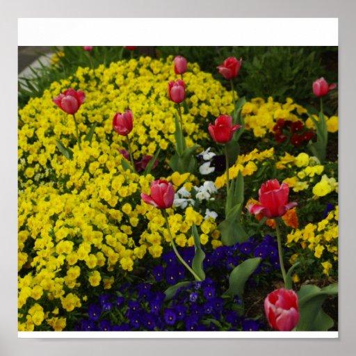 Poster de los tulipanes y de las flores de la prim póster