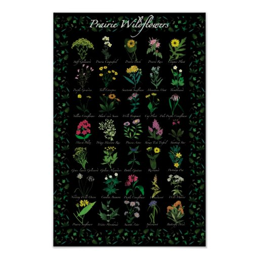 Poster de los Wildflowers de la pradera
