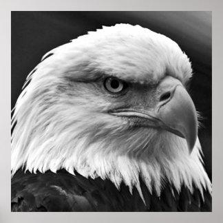 Poster de motivación calvo americano de la
