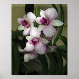 Poster de Orchideas
