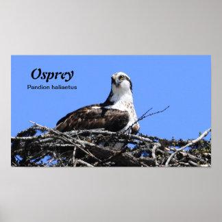 Poster de Osprey