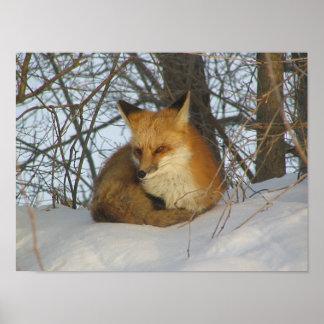 Poster de reclinación del Fox