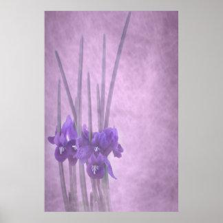 Poster de Reticulata del iris