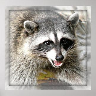 Poster de risa del racoon