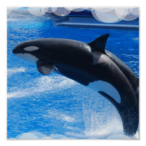 Poster de salto de la ballena de la orca
