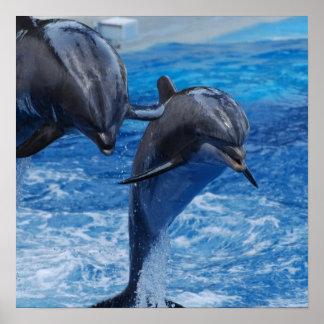 Poster de salto del delfín