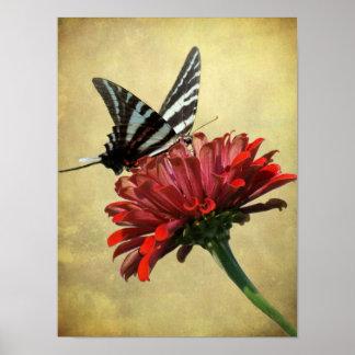 Poster de Swallowtail de la cebra