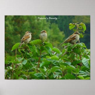 Poster de tres pequeño amigos de los pájaros