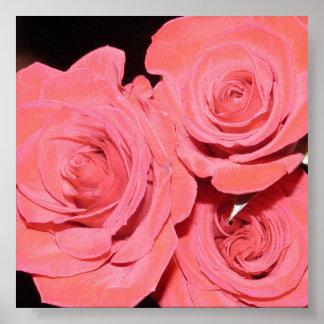 Poster de tres rosas