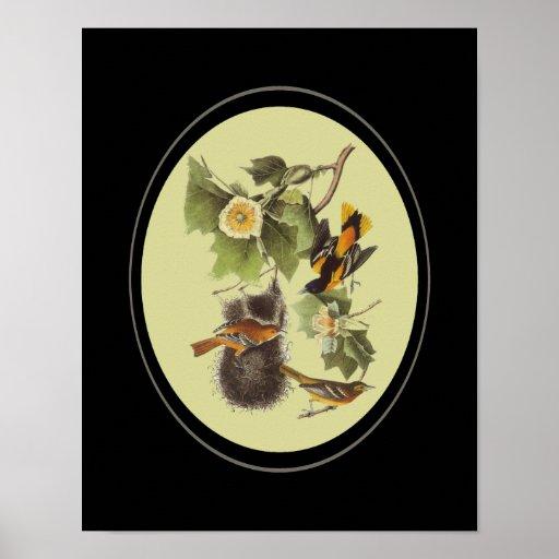 Poster de Troupial Oriole de los pájaros de Audubo