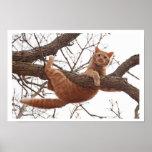 Poster de un gato alrededor a caerse de un árbol