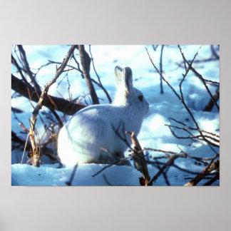 Poster de una liebre ártica