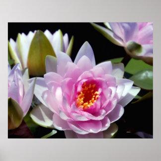 Poster de Waterlilies Póster