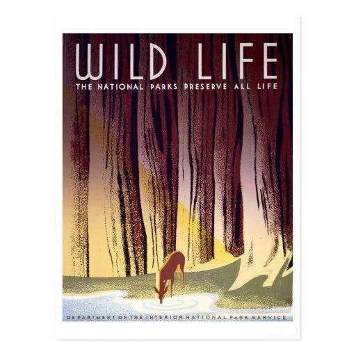 Poster de WPA de la fauna (ciervos) Tarjeta Postal