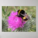 Poster del abejorro