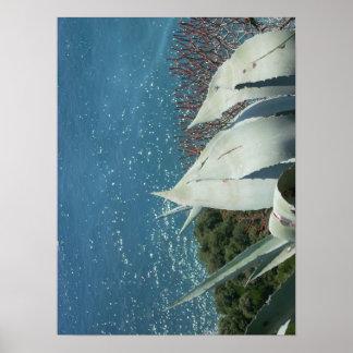 poster del agavo del océano