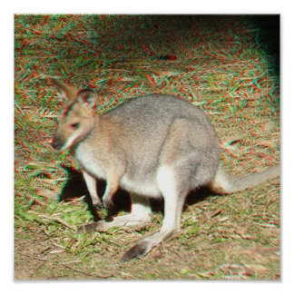 Poster del anáglifo del canguro 3D