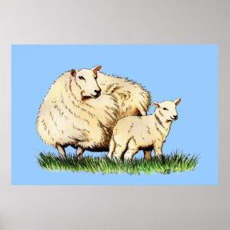 poster del animal de dos ovejas