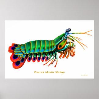 Poster del animal del filón del camarón de predica