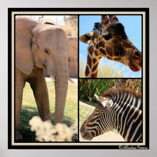 Poster del animal del safari