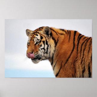 Poster del apetito de los tigres