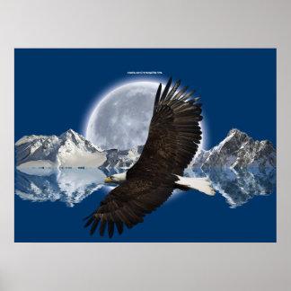 Poster del arte de Eagle calvo que vuela, de la