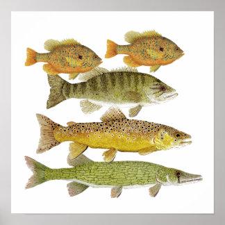 Poster del arte de los pescados de agua dulce
