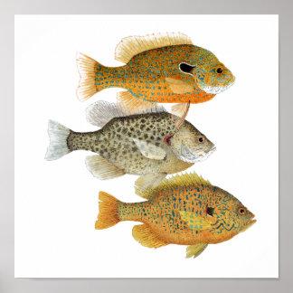 Poster del arte del Sunfish
