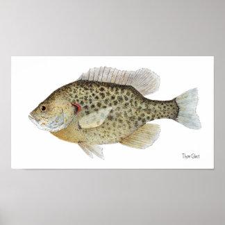 Poster del arte del Sunfish de Redear