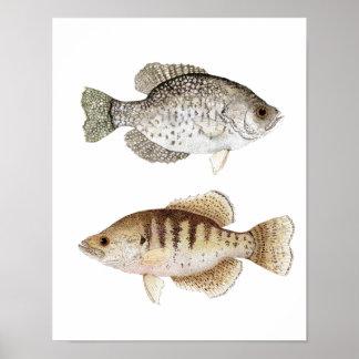 Poster del arte del tipo de pez negro y blanco