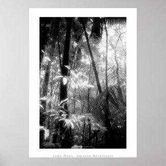 Poster del arte: Selva tropical del Amazonas. Blan