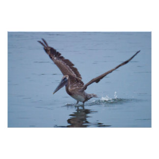 Poster del aterrizaje del agua del pelícano