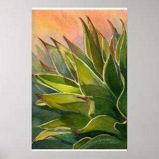 Poster del attenuata del agavo póster