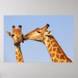 Poster del beso de la jirafa