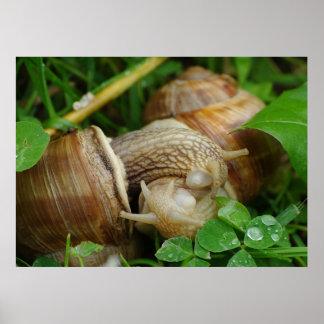 Poster del beso del amor de los caracoles póster