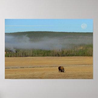 Poster del bisonte de Yellowstone