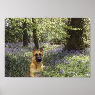 Poster del bosque del pastor alemán