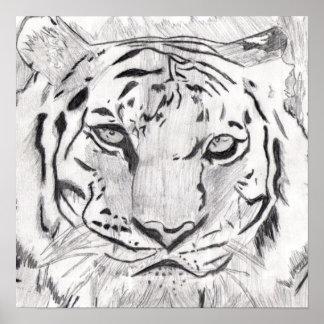 Poster del bosquejo del tigre