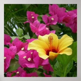 Poster del Bougainvillea y del hibisco