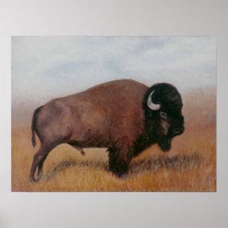 Poster del búfalo