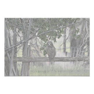 Poster del búho póster