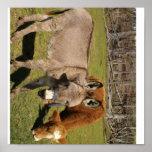 Poster del burro y de la vaca